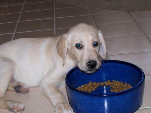 Puppy First Weekend 089